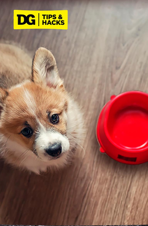 Switching Dog Food Image